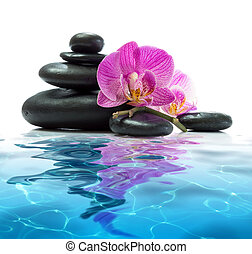 orchids with tower on water