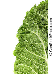 Slice of chinese cabbage on white background. There is space...