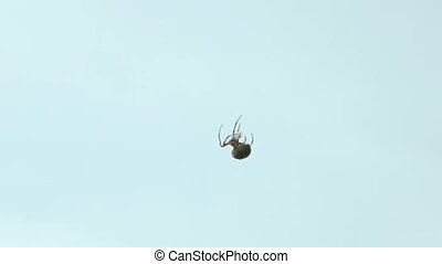 Spider on the web over blue sky