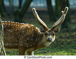 beautiful deer - close-up of a beautiful deer in the forest