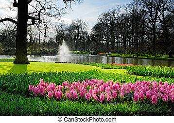 keukenhof - beautiful garden of colorful flowers in spring...
