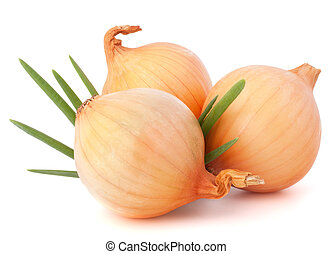 Onion vegetable