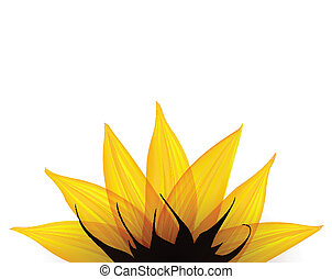 Sunflower part. Vector illustration eps10