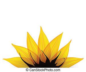 Sunflower part. Vector illustration eps10