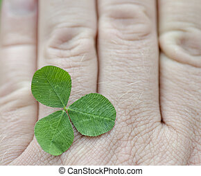 Three leaf clover in a hand