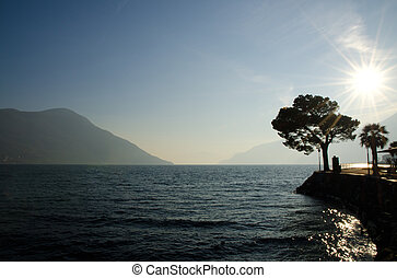 Tree in backlight - Tree on an alpine lakefront in backlight...