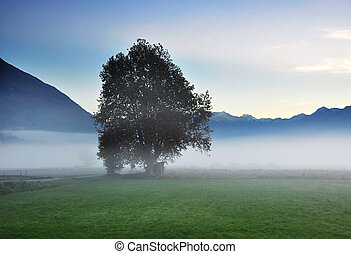 Tree in the fog - Lonely tree in the fog and mountains
