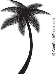 palm, träd, silhuett
