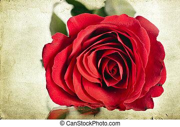 vindima, vermelho, rosas