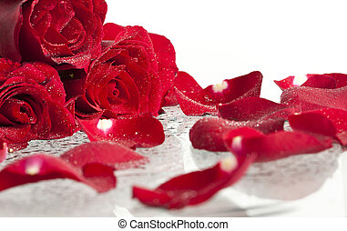 Red roses and petals - Red rose petals background