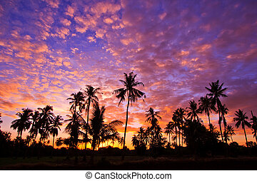 View silhouetted of coconut tree