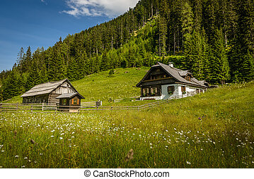 Alpine house - Traditional Alpine house on flowering field...
