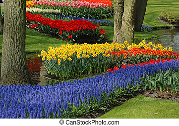 beautiful garden of colorful flowers in spring (keukenhof,...