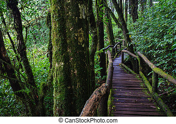 Wood footpath in tropical rain forest in Chiang Mai,...