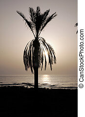 Silhouetted Palm