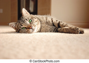 Tabby Kitten relaxing on carpet - Cute tabby cat with green...