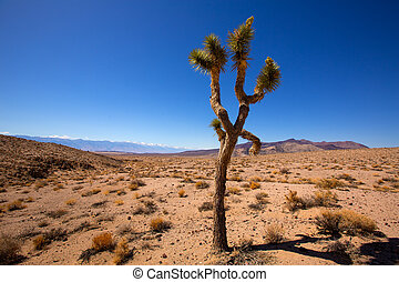 Death Valley joshua tree yucca plant with snow mountains and...