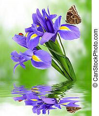 purple iris flower with butterfly morpho