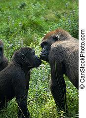 Gorilla, szeret