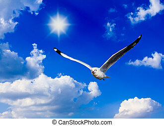 A photo of a flying seagull and blue sky.