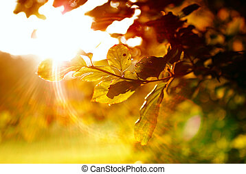 Colorful leaves with sunbeam at morning.