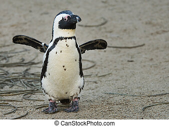 cute penguin flapping its wings