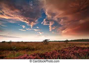 heavy rainy clouds over swamp at sunset