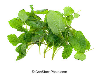fresh lemon balm herb