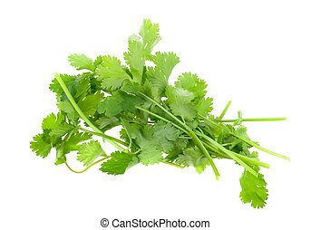 fresh coriander cilantro herb isolated on a white background...