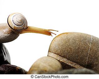 snail  on rocks