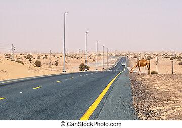 Camel on a desert road