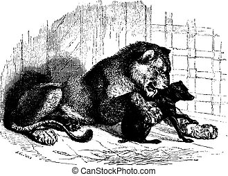 Lioness with cub, vintage engraving.