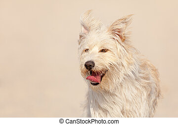 Golden dog at the beach - Cute white dog at the beach on a...