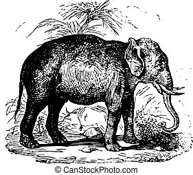 Elephant, vintage engraving. - Elephant in forest, vintage...