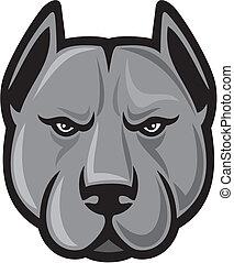 pit bull head (pit bull terrier)