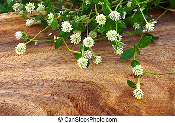 Mexican daisy (Tridax procumbens L.) on wood surface.