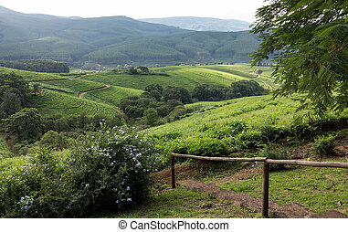 South Africa countryside in Komatiland Forest - Countryside...