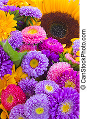 colorful autumn flowers background
