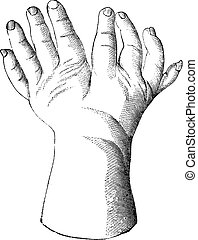 Bifurcated hand, vintage engraving.