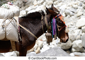 Portrait of donkey with heavy load at Everest Base Camp trek...