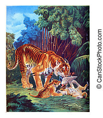 The Tiger, vintage engraving - The Tiger with cubs eating...