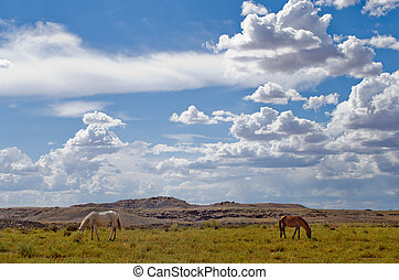 Horses grazing in Utah near the Four Corners area of the USA...