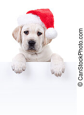 Christmas Banner Dog - Christmas Labrador puppy dog in santa...