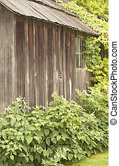 Old Shack - This is one side of an old abandoned shack with...