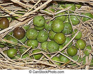 laxiflora, fruta, vangueria, rubiaceae, spinosa, alu, meyna...