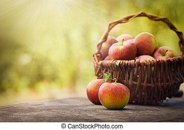 Freshly harvested apples - Fresh harvest of apples. Nature...
