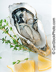 Fresh oysters with lemon and ice