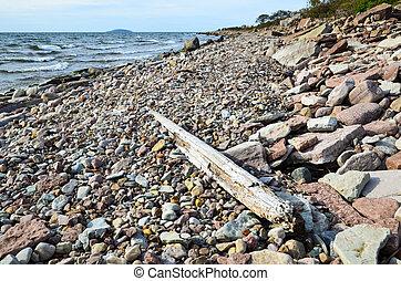 Driftwood at stony coast - Driftwood at the stony coast of...