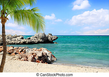 Tropical Beach with Palm Tree - Dragon Beach on Labadee,...