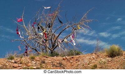 Womens bras hanging in a tree - Dead tree covered in bras...